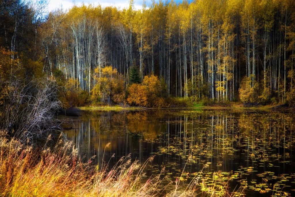 fall-