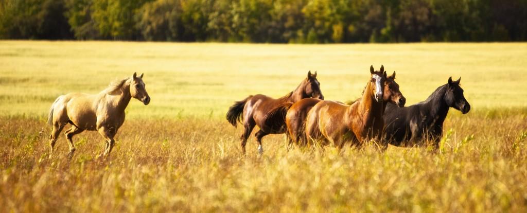 horses_FSJ-