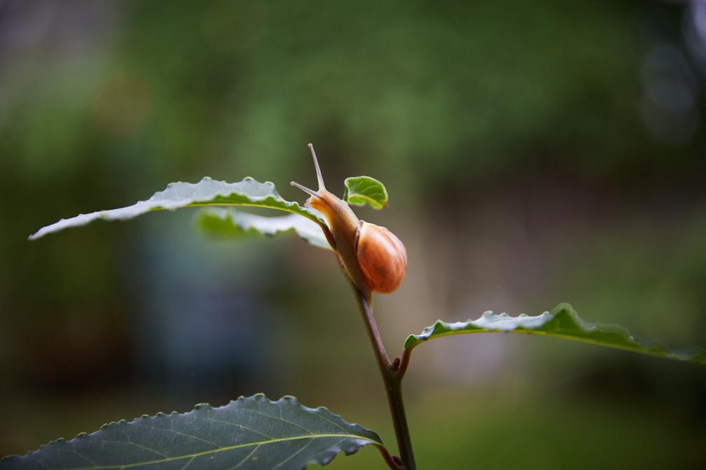 Hadley_snail-5