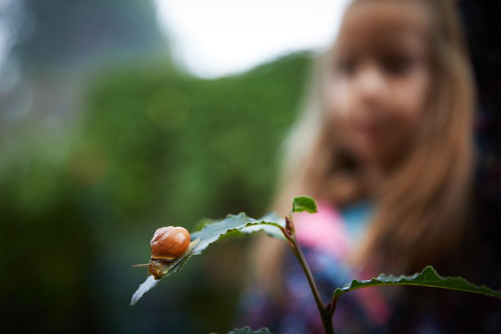 Hadley_snail-6