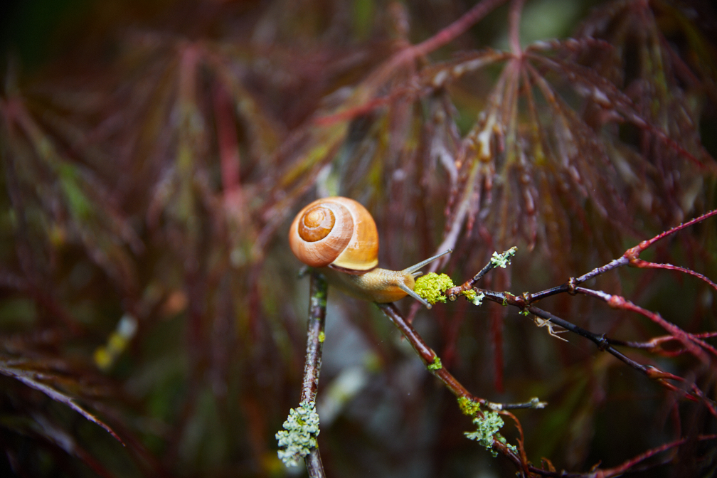 Hadley_snail-7