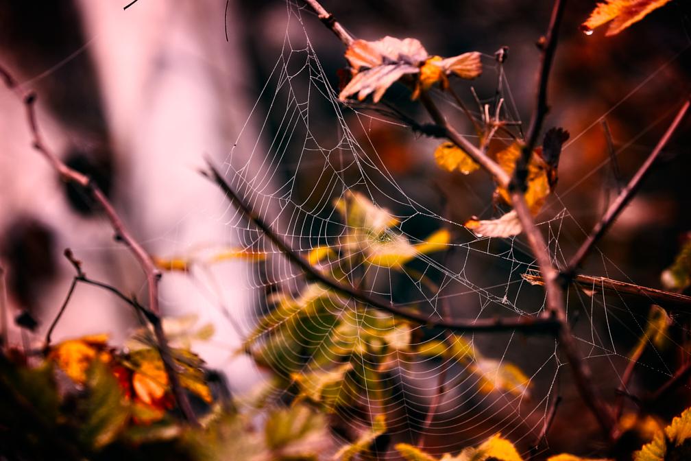 SimonSees-Webs_WEB-1