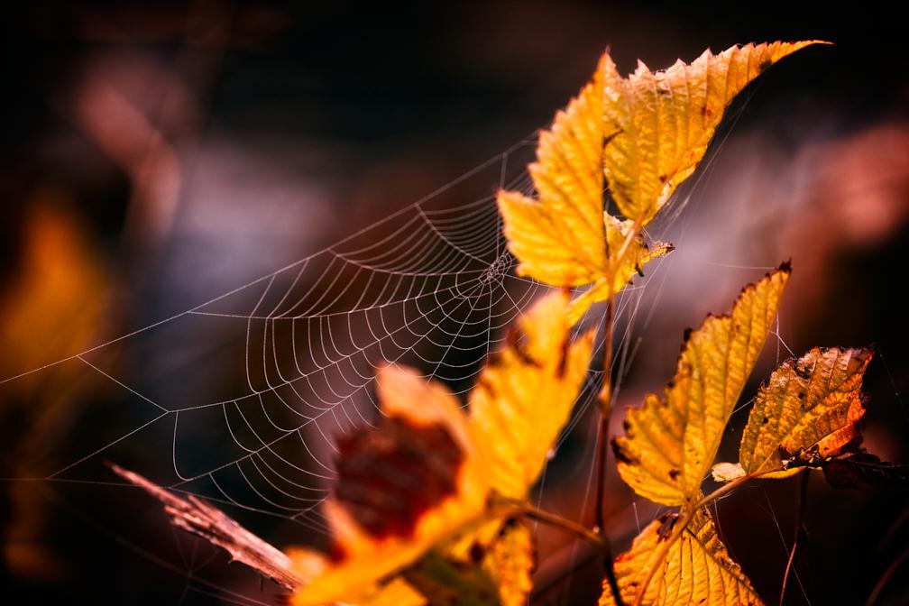 SimonSees-Webs_WEB-2